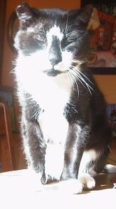 Sunlight-Cat